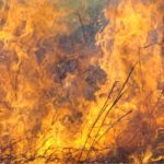 Grote bosbrand treft regio Alicante