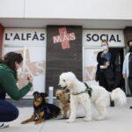 L'Alfàs launches a new edition of the inclusive training program 'Edukadogs'